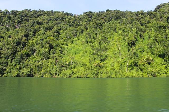 jezero u lesa