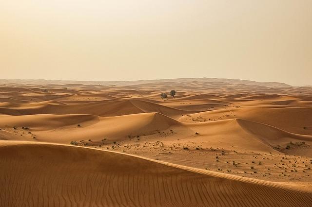 poušť se stromy