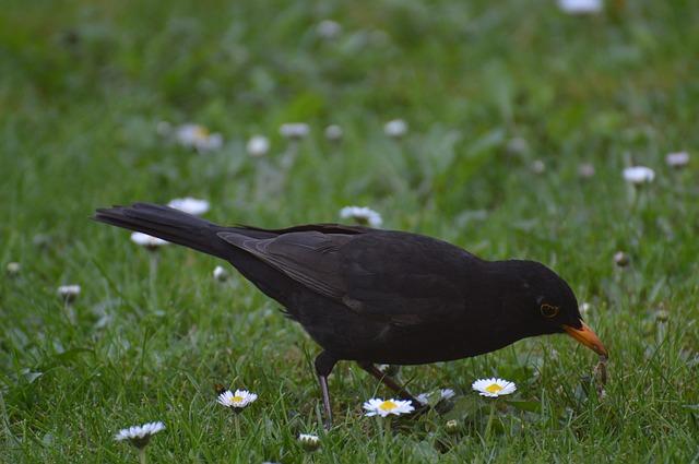 pták se žížalou