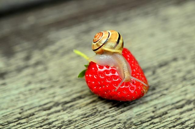 šnek na jahodě