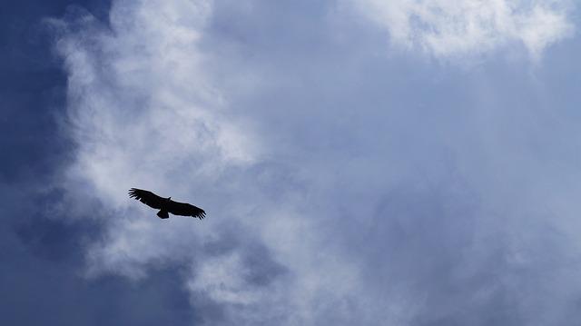 orel na obloze