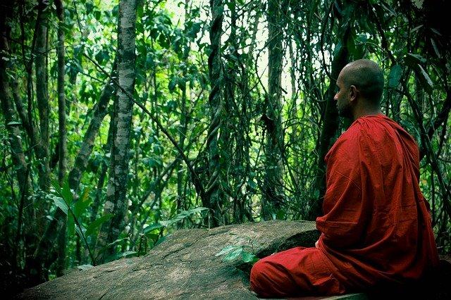 meditace v lese.jpg