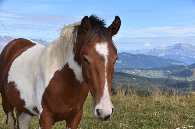 Koník na horách