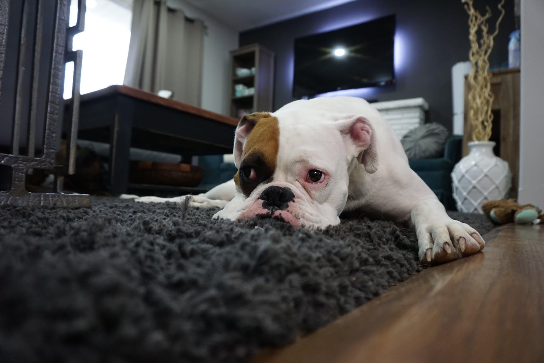 pes na podlaz